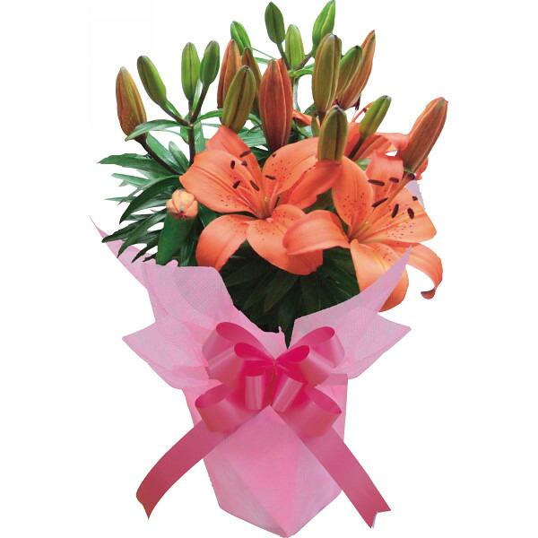 リリー マトリックスオレンジ 母の日 2014 ギフト 母の日メッセージカード付き(代引き不可)