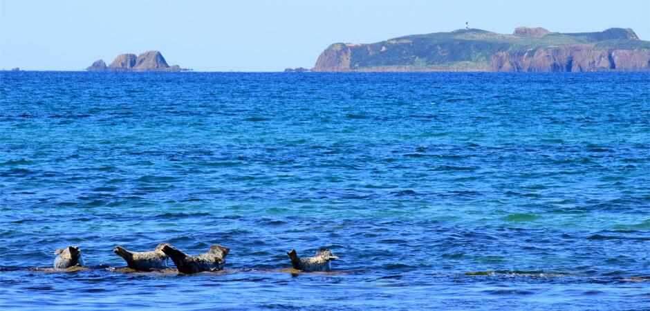 アザラシのいる海