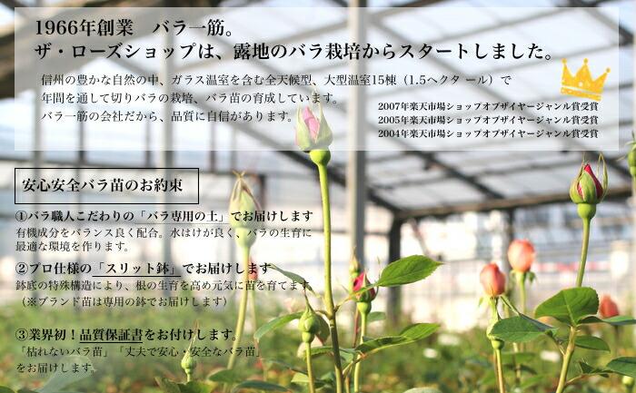 素敵なバラ苗たち バラのあるガーデンに!