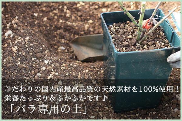 バラ専用の土