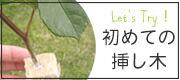 バラの挿し木の仕方 挿し木でバラを増やす