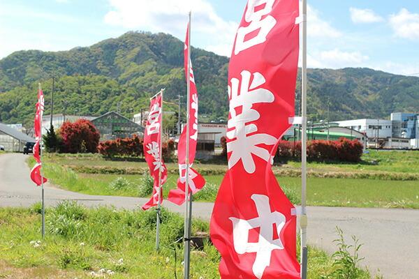 赤いのぼりが目印です バラ苗や新苗、大苗、園芸資材なども販売中