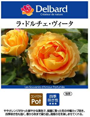 フレンチローズ デルバールのバラの苗