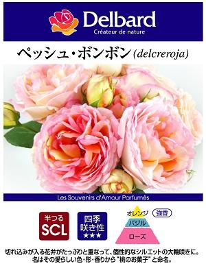 フレンチローズのバラの苗 ペッシュボンボン