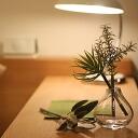 bonboog ( bombing ) / botanical Botanical Pen pen (anemones, plant)