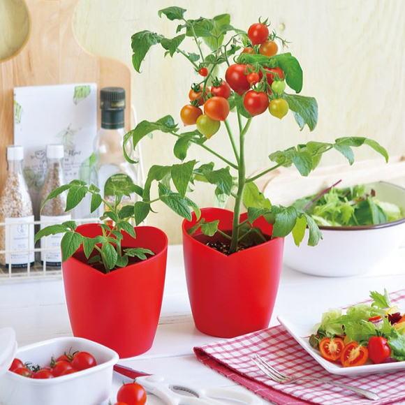 トマトの画像 p1_27