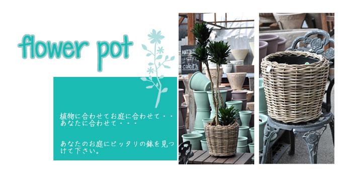 かわいい鉢 おしゃれな鉢 さいじょう緑花