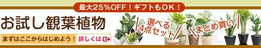 お試し観葉植物 最大25%OFF! ギフトもOK!