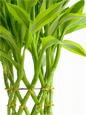 写真:レギュラー・ラージ観葉植物