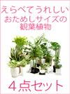 【送料無料】 お試し観葉植物 選べる4点セット