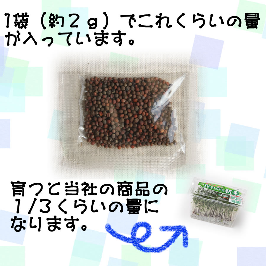 ブロッコリースプラウト(新芽)の種1袋約2g・成長すると当社の商品でいうと1パックの1/3くらいの量になります。