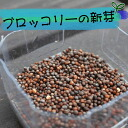 Seeds of broccoli sprout ( sprout ) 1 bag