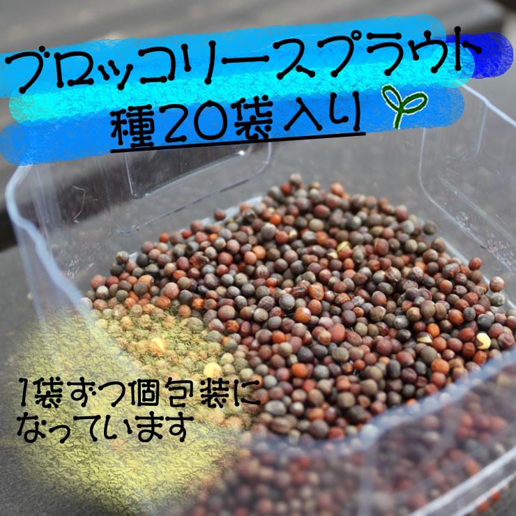 ブロッコリースプラウト(新芽)の種・水耕栽培で育つので土は不要です。