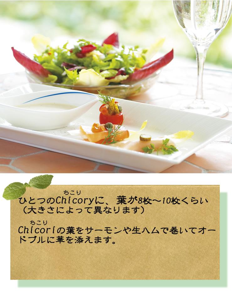 国産ちこり(アンディーブ)西洋野菜【チコリ】chicory endive