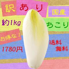 【送料無料】訳ありお徳用ちこり約1KG●1780円