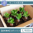 It was introduced in a person of ぐっさん! Because you cannot do it, approve the bundling with 6 seedling pot food of the ちこりの flower. I send it out only with this product
