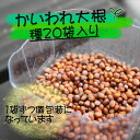 Sunshine, suku, fresh sprout vegetable ( shoots ). Seeds of radish sprouts sprout ( sprout ) 20 bags