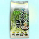 Spinach shoots (sprout) Pack of 12 pieces