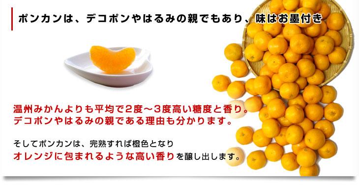 【九州産】【野菜セットに同梱可能です】佐賀産!【青梗菜1袋】