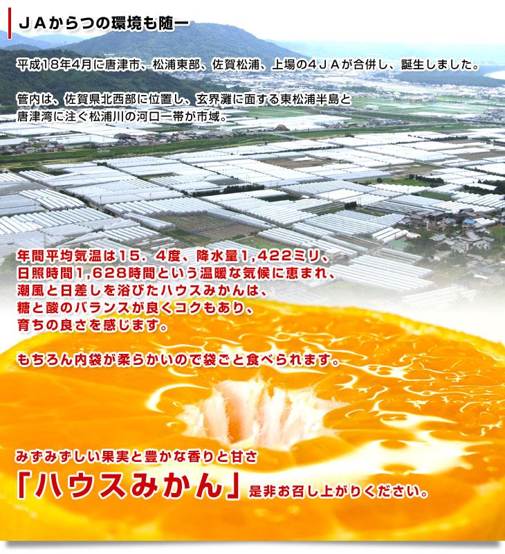 九州熊本県のJAたまな特選トマト★箱入り1.3kg!