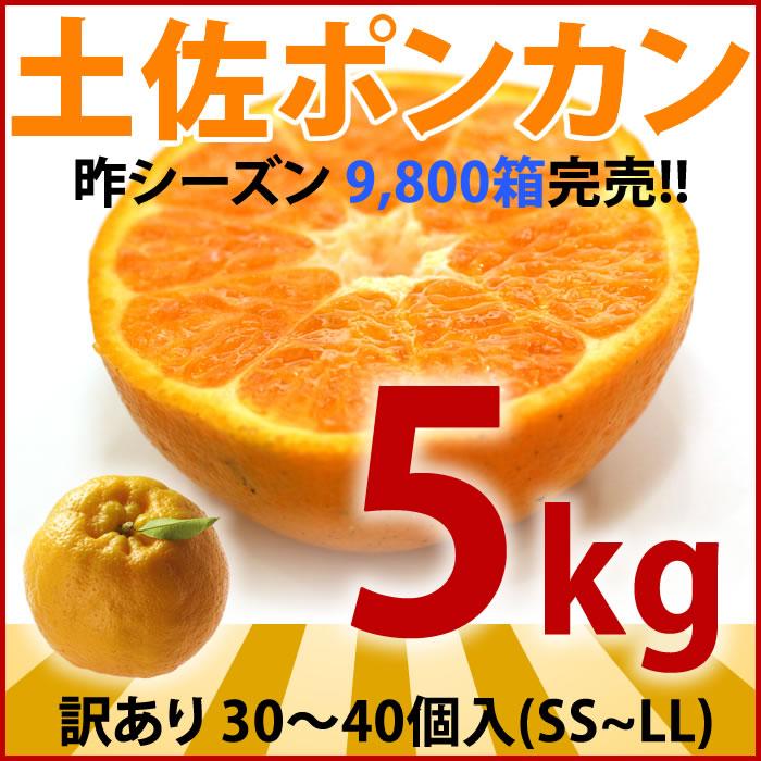 【九州産】【野菜セットに同梱可能です】佐賀県産!【たまねぎ1kg】