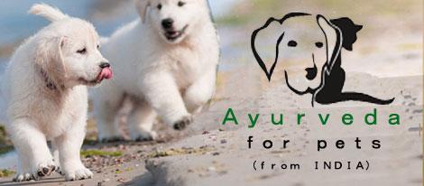 Ayurveda for pet