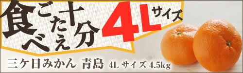 三ケ日みかん4L