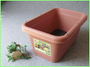 Vegetable garden container 520 type