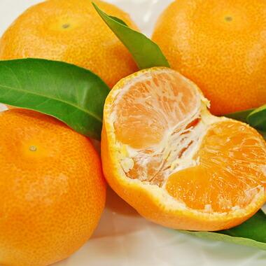 お中元に桃やハウスみかんなどのフルーツセット