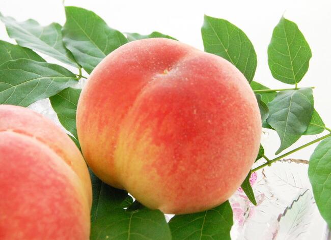 旬の桃たっぷりのフルーツギフト