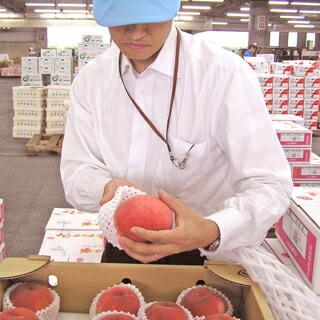 【お中元や夏のギフトに】大玉の桃を化粧箱に詰めた爽やかなフルーツギフト
