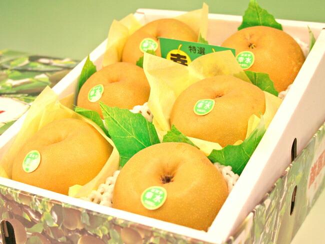 温室栽培山梨産幸水梨