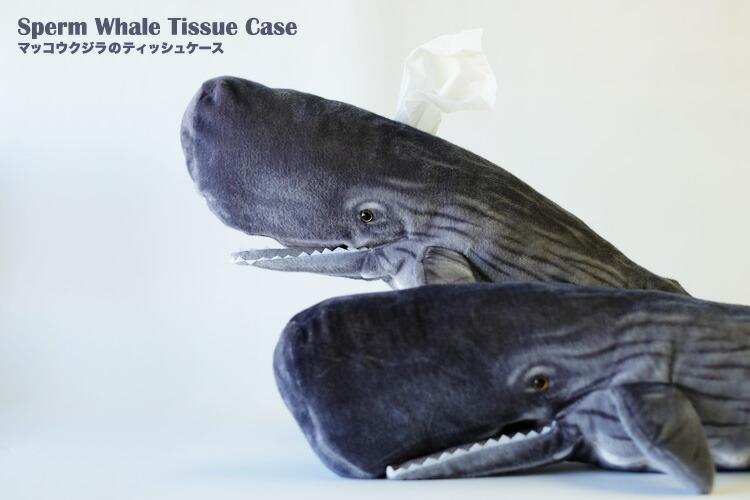 マッコウクジラの画像 p1_39