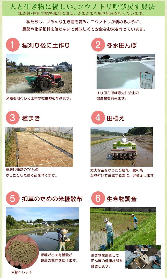 コウノトリ呼び戻す農法の取り組み