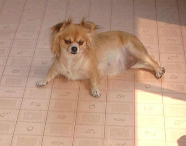 ぼうかびこうきんしょうしゅう mold Ko Kyn show Shu cushion floor CF くっしょんふろあー-proof