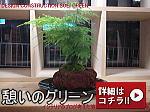 観葉植物 グリーン 憩い モンステラ