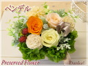 Flower プリザーブドフラワーアレンジメントペンデル DAN-P057fs3gm which does not become refined