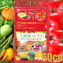 Gypsophila Fresh Enzyme & Tomato 60cp/30days≪Lycopene Derived From Tomato Containing Food≫『4562273162046』