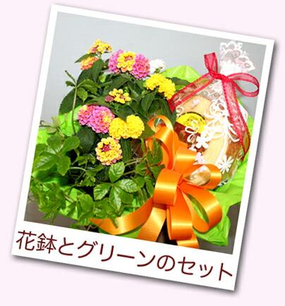 花鉢とスイーツ スタジオHiro楽天市場店 フラワーギフト