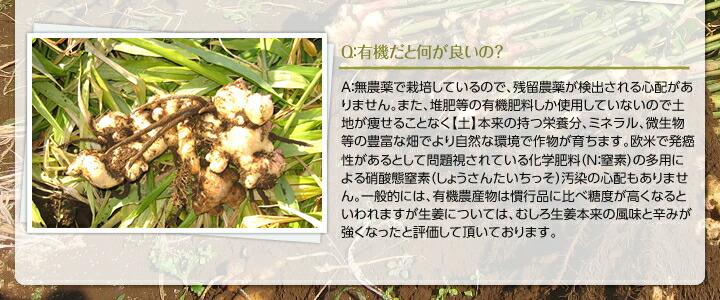 有機生姜の特徴