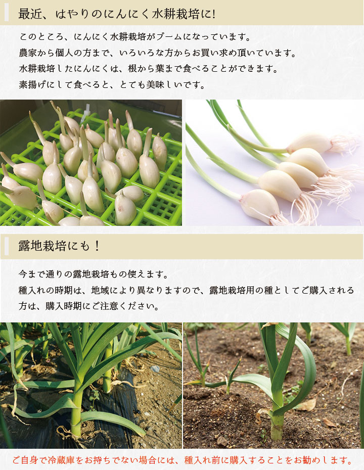 中国産 にんにく 栽培