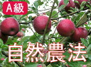 Houzumi's natural farming apples Jonathan [about 14 kg (packed 3 ):