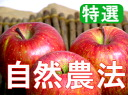 Houzumi organic farms natural farming apples Fuji [5 kg].