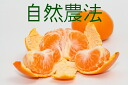 Approximately 10 kg of mandarin orange ※ size mixture of Yamashita