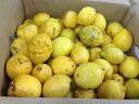 K. shichiro Grandpa lemon 2 lbs * size mixture