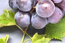 Natural farming grape ( with grape 1 kg [boxed] * chemical pesticide and chemical fertilizer free