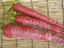 Mr Matsuura, organically grown carrot 3 book
