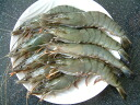 ★ seems carefully selected seafood!  Tachibana marine prawn ( black tiger ) 6 tail with