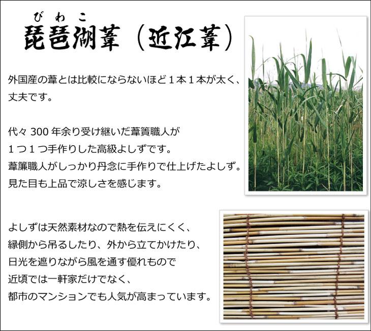 琵琶湖葦(近江葦) 外国産の葦とは比較にならないほど1本1本が太く、丈夫です。代々300年余り受け継いだ葦簀(よしず)職人が1つ1つ手作りした高級よしずです。葦簾職人がしっかり丹念に手作りで仕上げたよしず。見た目も上品で涼しさを感じます。よしずは天然素材なので熱を伝えにくく、縁側から吊るしたり、外から立てかけたり、日光を遮りながら風を通す優れもので、近頃では一軒家だけでなく、都市のマンションでも人気が高まっています。