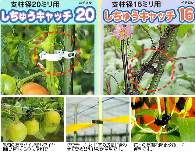 支柱キャッチ20 しちゅうキャッチ16の使用イメージ。果樹の枝をパイプ棚やワイヤー棚に誘引するのに便利です。防虫テープ張りに茎の成長に合わせて留め替え移動が簡単です。花木の枝分かれ防止や誘引に便利です。
